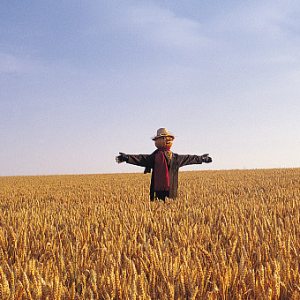 稻草人—与清风共同守望